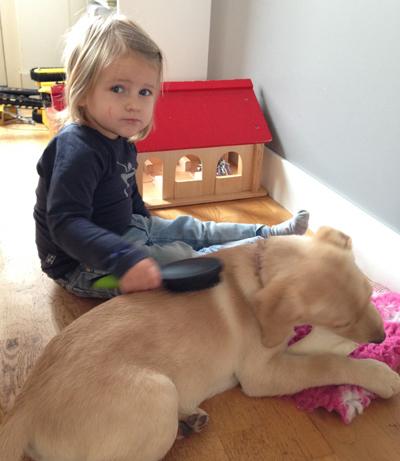kind-borstelt-hond