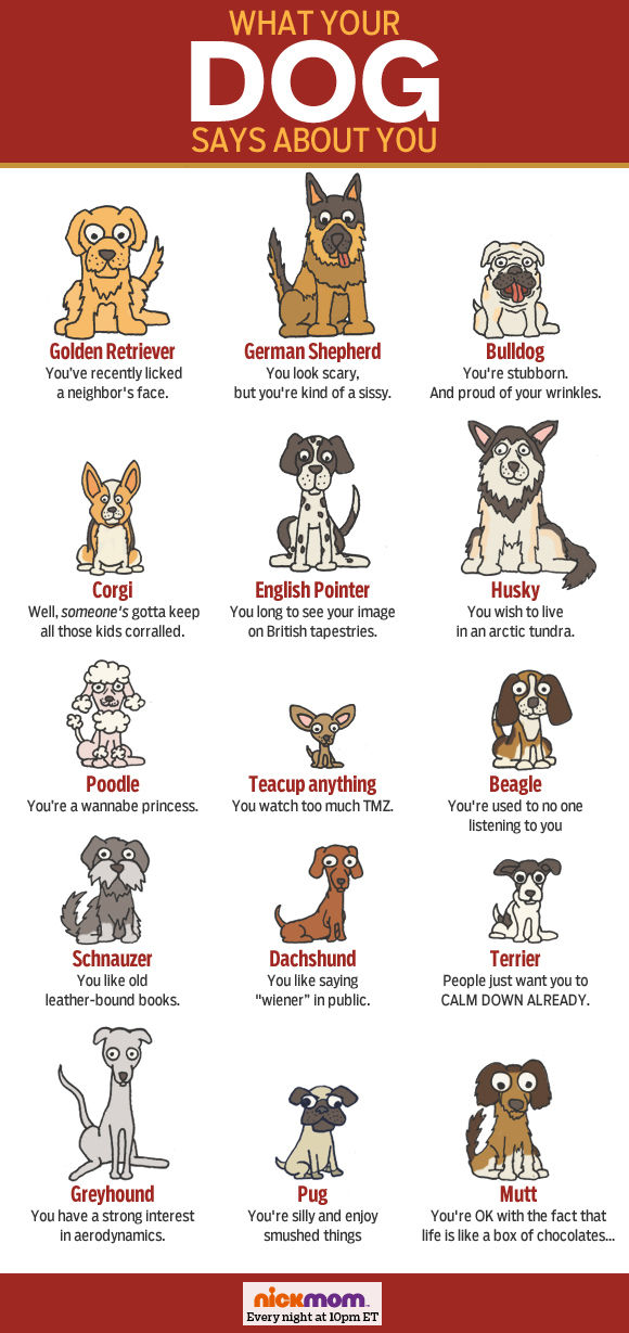 what-dog-says-article