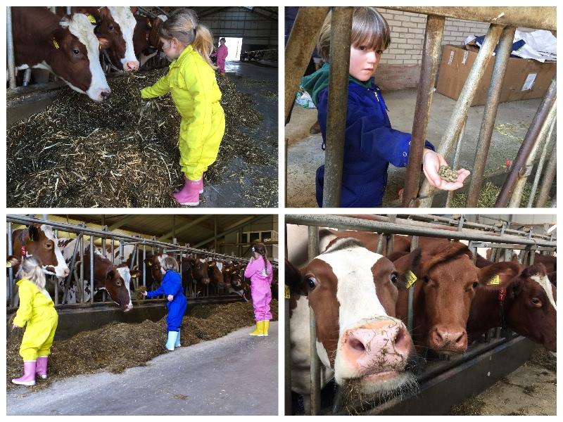 helpen op boerderij Erve Baak