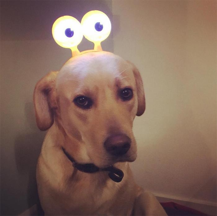hond-19