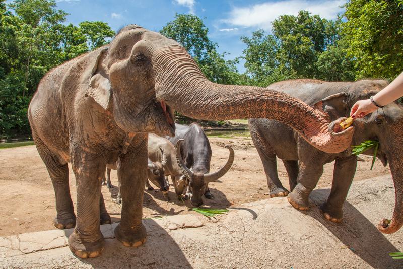 Het Elephant Nature Park chiang mai