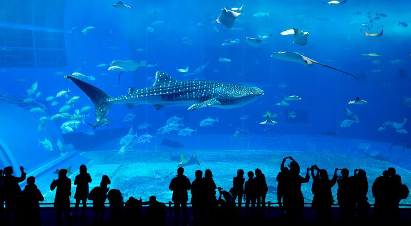 het aquarium atlanta