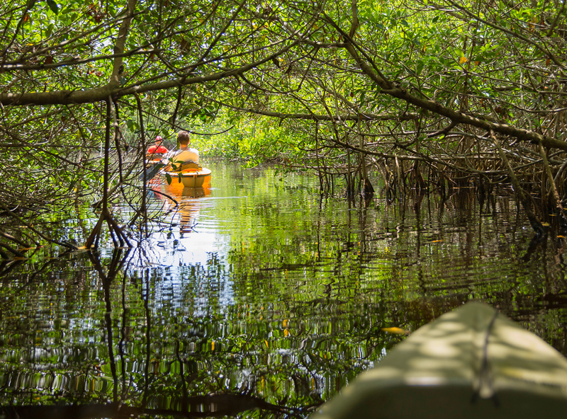 kayak Everglades