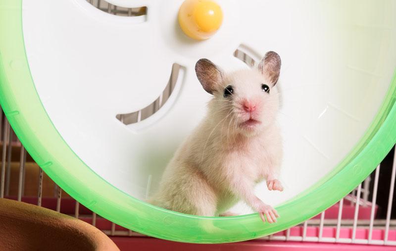 hamster dood