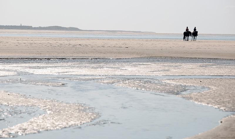 zeehonden spotten baai van de somme