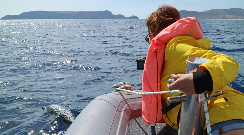 dolfijnen spotten santo porto