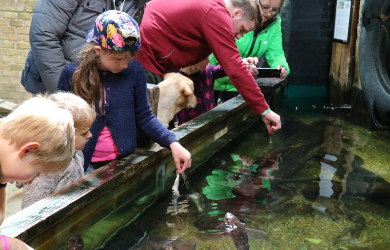 vissen voeren Jyllands Akvariet