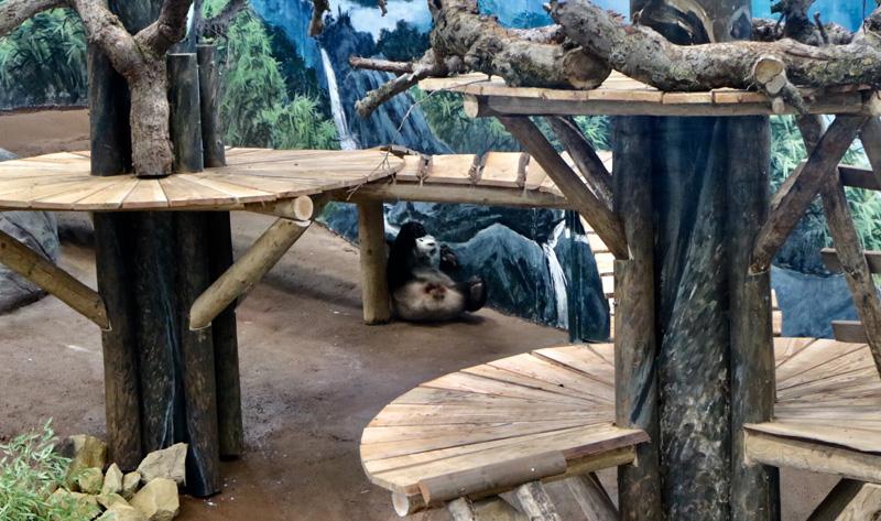 panda rolt om