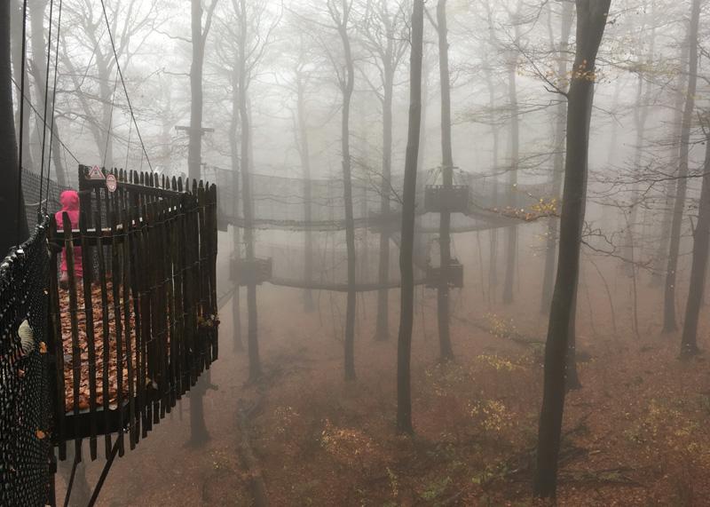 Hoherodskopf boomtoppenpad mist