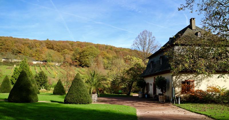Klooster Eberbach wijngaard