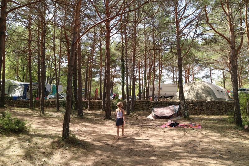 plekken in het bos