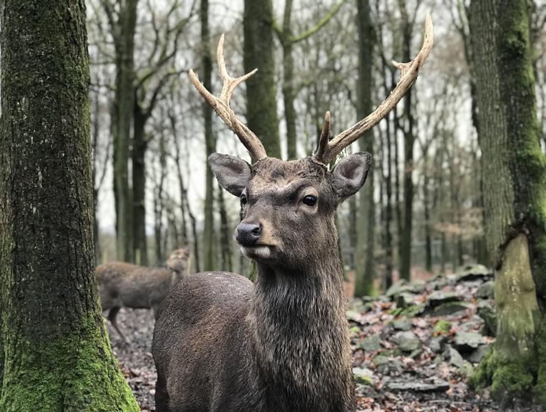 wildpark-La Roche-en-Ardenne