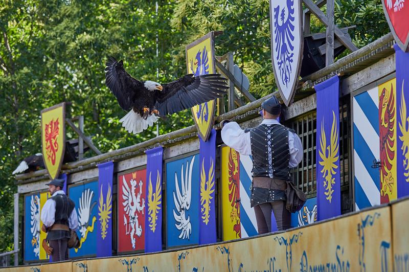 Le-Bal-des-Oiseaux-Fantomes