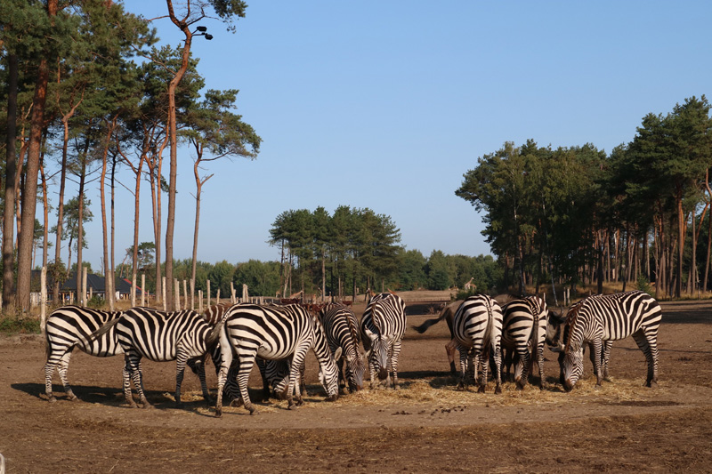 zebra safari resort beekse bergen