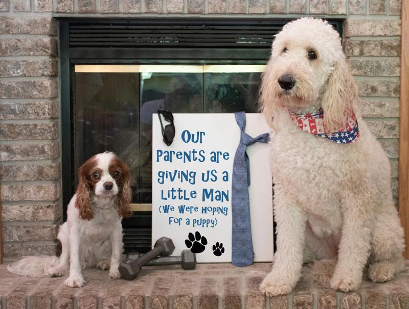 huisdier aankondiging zwanger