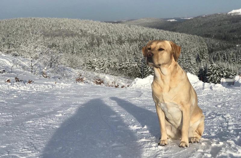 hond mee landal winterberg