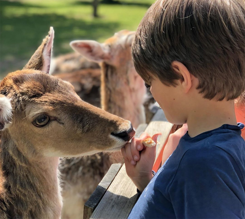 dieren voeren dierenbos