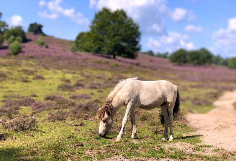 paarden posbank