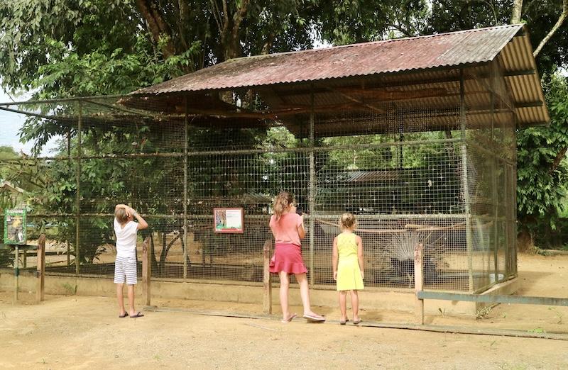 paramaribo zoo kinderen