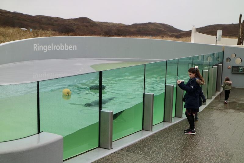 ecomare zeehonden kijken