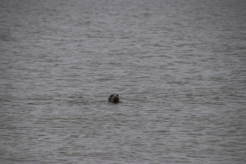 texel zeehonden zee