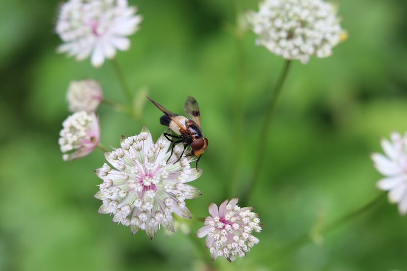 flora en fauna Ehrwald Wassererlebnisweg zugspitze