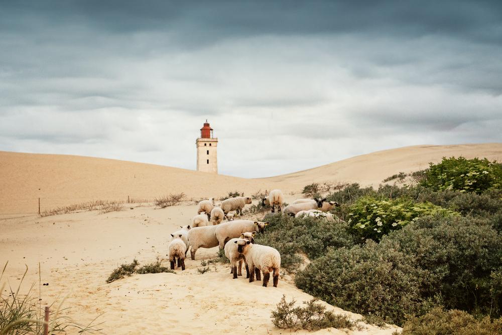 Afbeelding door Pilguj / Shutterstock